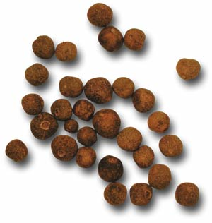 Jamaican Allspice (pimento) photo